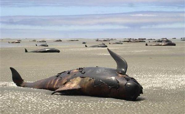 kihalnak az óceánok