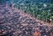 Összefüggést találtak az amazónai erdőirtás és a malária terjedése között