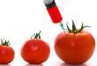 Nébih: Szigorúbbá váltak a GMO-mentes termelés szabályai