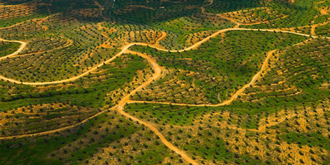 Még mindig természetromboló pálmaolajat használunk