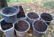 Városban kertészkednél? 5 javaslat a talaj megtisztításához