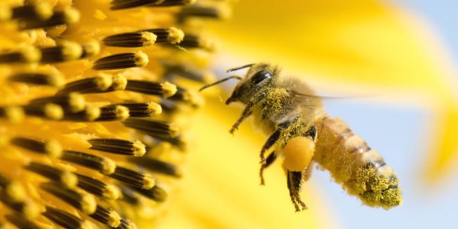 Csaknem másfél milliárd munkahely függ a világon a méhektől