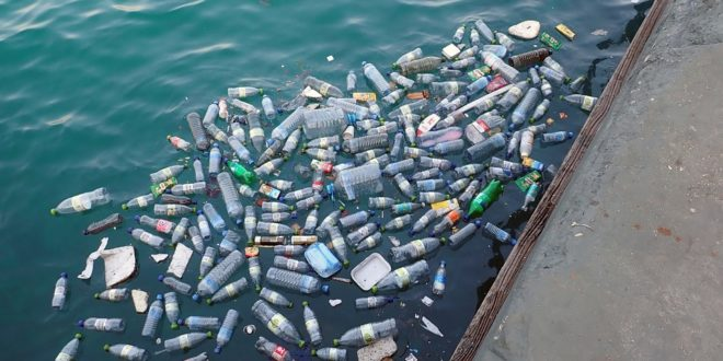 Műanyaghulladékot mutattak ki a halak gyomrában