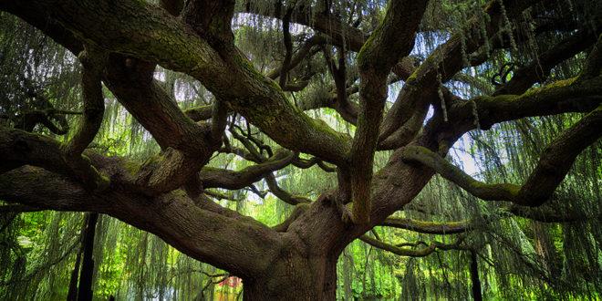 Melyik legyen az Év fája? Szavazzon!