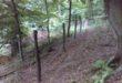 15 ezer facsemetét ültettek el az Aggteleki Nemzeti Parkban