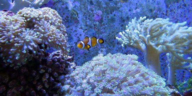 Óriási kárt okoz a korallzátonyok fehéredése