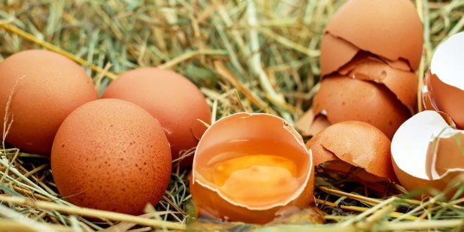 Energiát tárolhat a tojáshéj