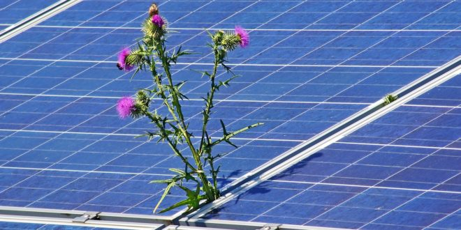 Közép-Európa legnagyobb naperőművét építik fel a kínaiak Kaposváron