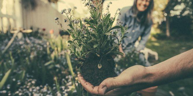 Otthonról is megmenthető a világ? – a dm kampányában mindenki megteheti saját környezettudatos vállalását!