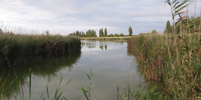 Vizes élőhelyek újulnak meg a Duna mentén