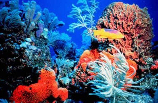 korallfakulás