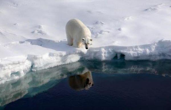 állatfajok kihalása