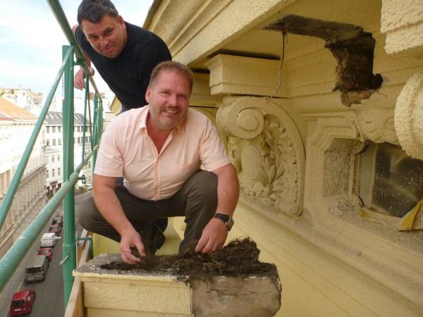 A Kürschner Bau két ügyvezetője, Georg Szücs és Gerhard Theurer fecskefészket takarítanak.