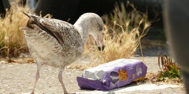 Mennyi műanyagot esznek meg az állatok?