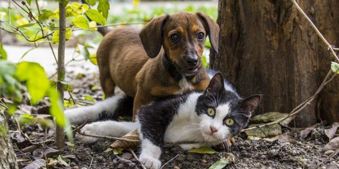 Koronavírus – Betiltják a kutya- és macskahús fogyasztását a dél-kínai Sencsenben