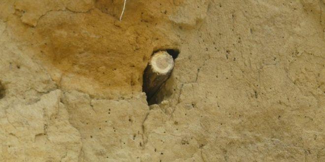 Eljárás indult a méhész ellen: védett madarak költőhelyét tette tönkre